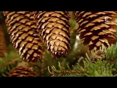 video o přírodě